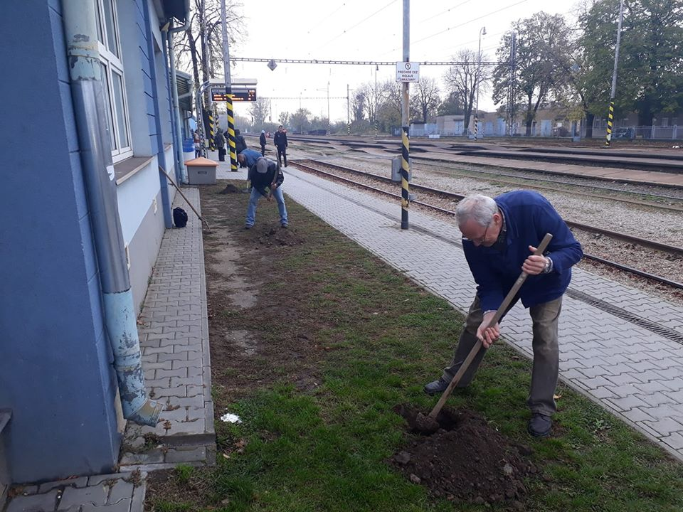 sadenie železničná stanica Šaľa