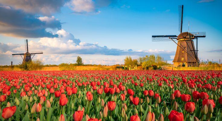 Ekologické spracovanie odpadu CCE - Šaľa ako Holandsko